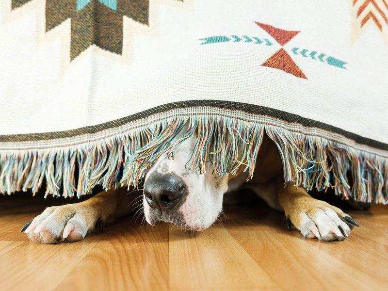 Techniken zur Stressbewältigung mit kognitive Verhaltenstherapie